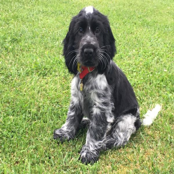 Raising a Hearing Dog Puppy
